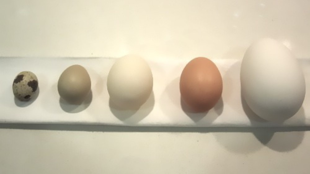 Cuanta proteina tiene un huevo crudo